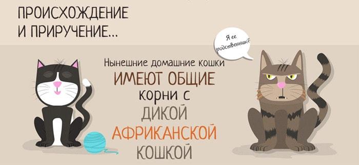 Zabavnyie-faktyi-o-koshkah-2
