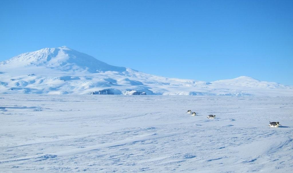 antarkticheskaya-pustynya