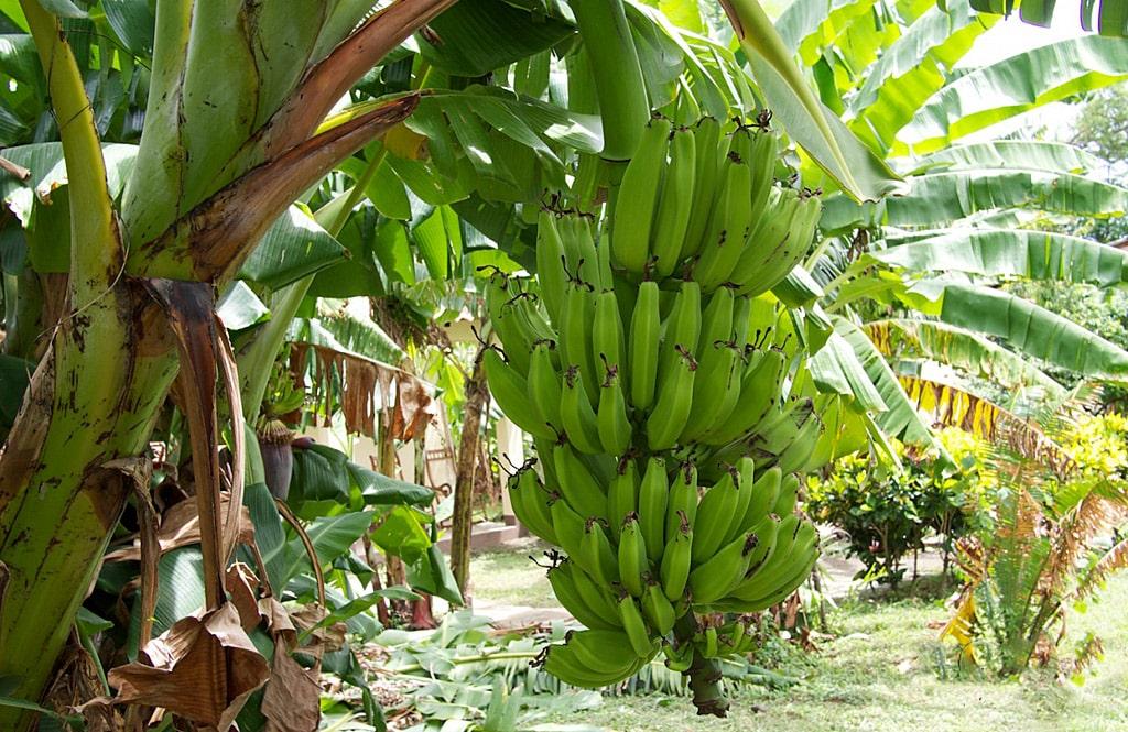 Банановый панчо рецепт с фото называется такое