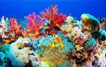 12 интересных фактов о Красном море