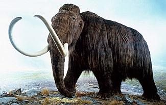 27 интересных фактов о мамонтах