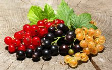 15 интересных фактов о смородине