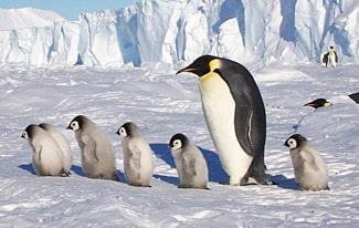 17 интересных фактов о Южном полюсе