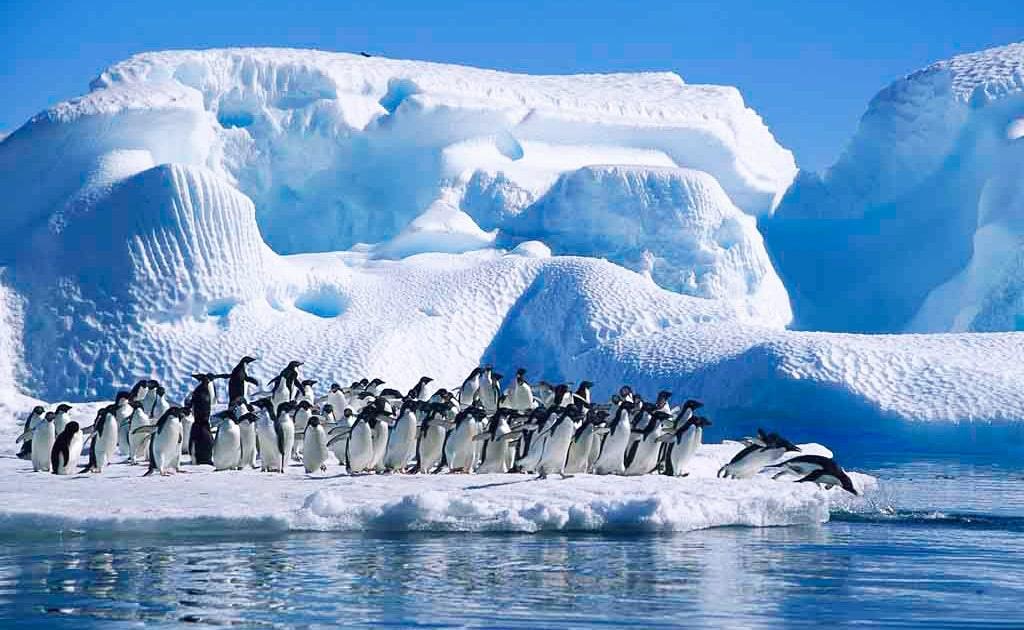 interesnye-fakty-ob-antarktike