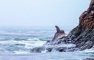 15 интересных фактов об Охотском море
