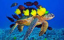 25 интересных морских фактов
