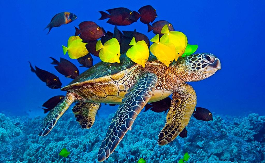 interesnye-morskie-fakty