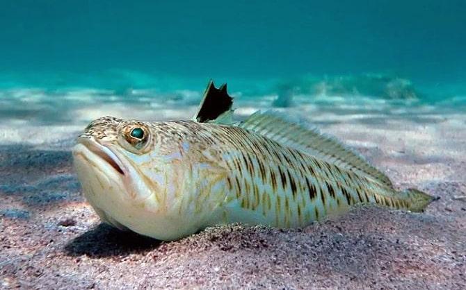 morskoj-drakon