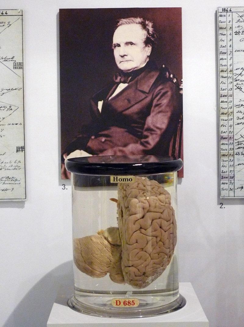 mozg-charlza-bebbidzha-v-muzee-nauki-v-londone