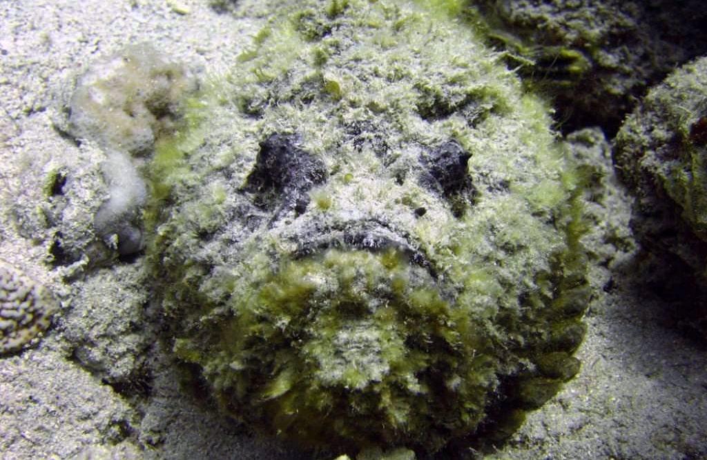 ryba-kamen