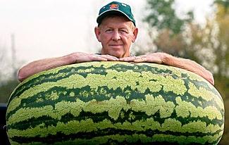 Самые большие ягоды в мире