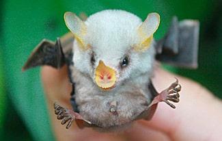Самые необычные существа в мире