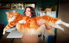 Самый большой кот
