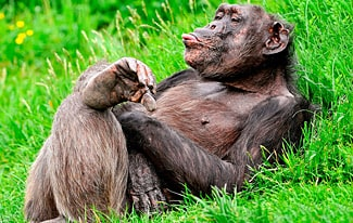 20 удивительных фактов о животных