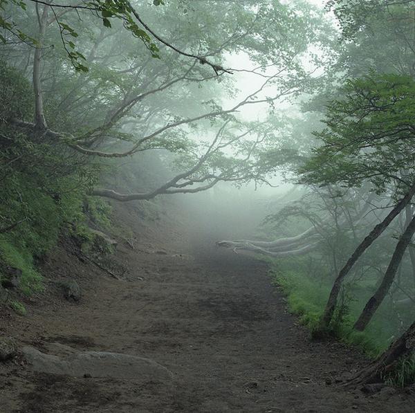 Лес самоубийц (09)