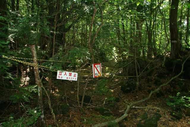 Лес самоубийц (10)