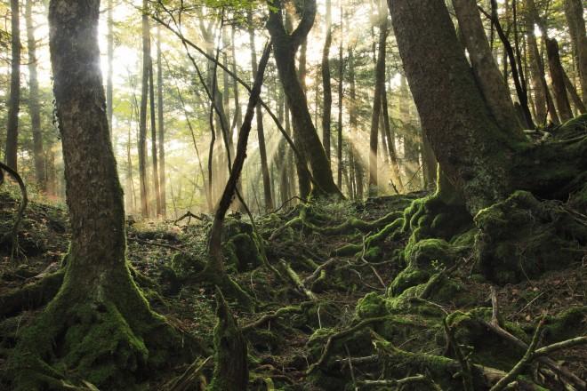 Лес самоубийц (5)