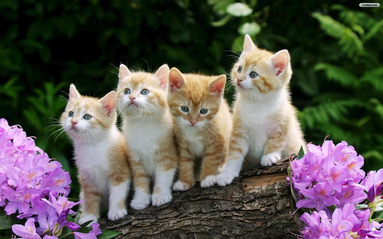 Интересные факты о кошках (1)