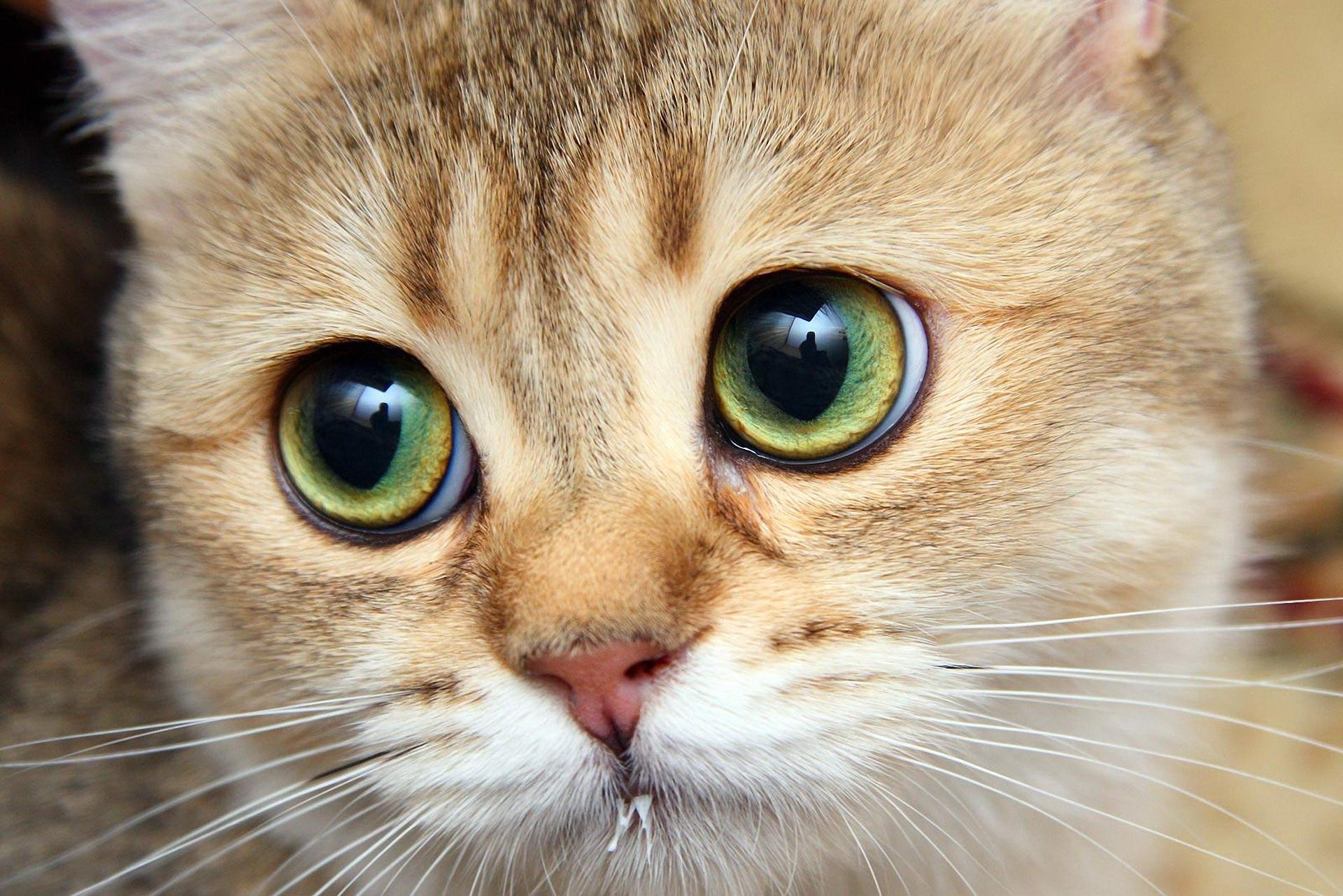 Интересные факты о кошках (2)