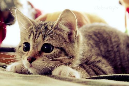 Интересные факты о кошках (6)