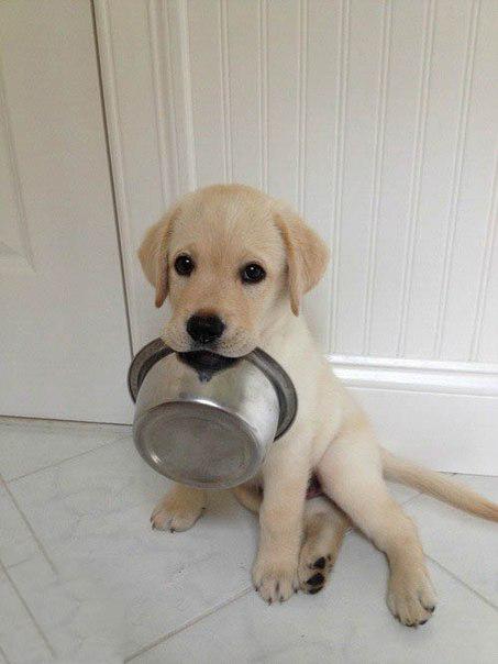 9. Интересные факты о собаках