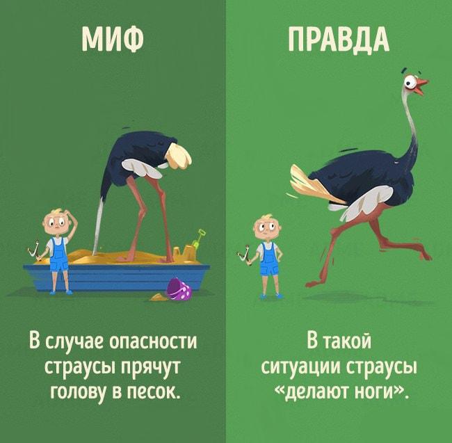 5-mifov-o-zhivotnyih-1