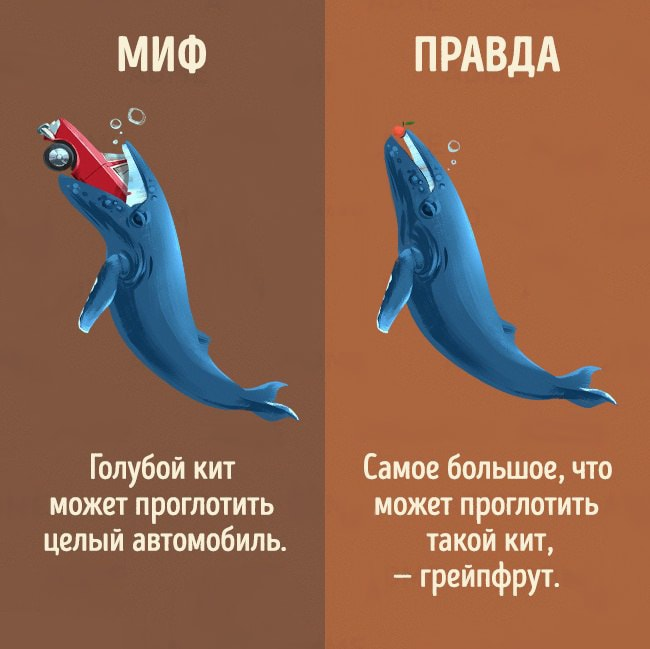 5-mifov-o-zhivotnyih-3