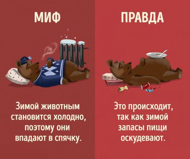 5-mifov-o-zhivotnyih-4
