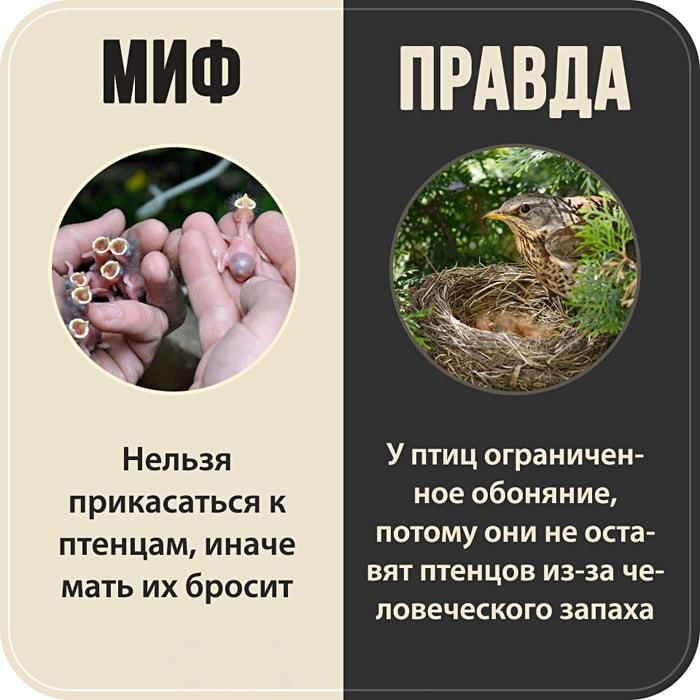 7-populyarnyih-mifov-2