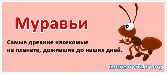 Interesnyie-faktyi-iz-zhizni-3