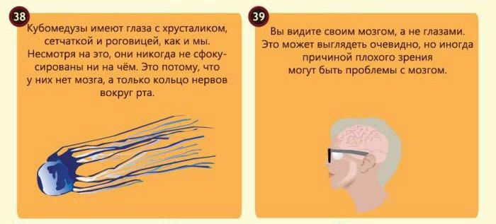 Interesnyie-faktyi-o-glazah-17