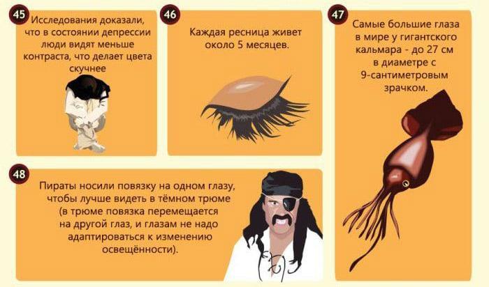 Interesnyie-faktyi-o-glazah-21