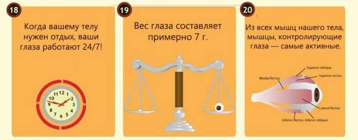 Interesnyie-faktyi-o-glazah-8