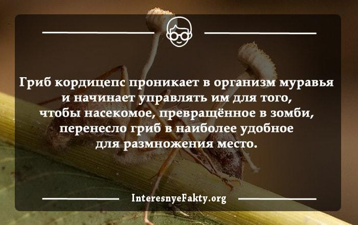Interesnyie-faktyi-o-gribah-2