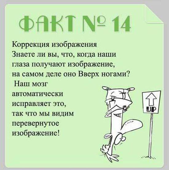 Interesnyie-faktyi-o-mozge-14