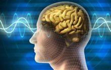 15 интересных фактов о мозге