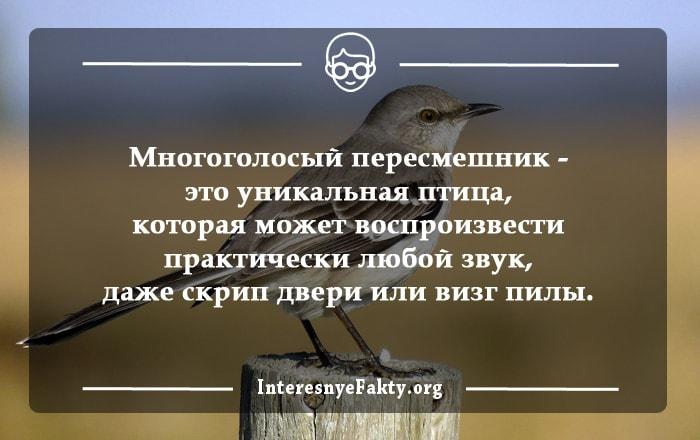 Interesnyie-faktyi-o-ptitsah-3