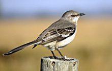 Интересные факты о птицах