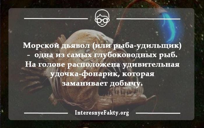 Interesnyie-faktyi-o-ryibah-2