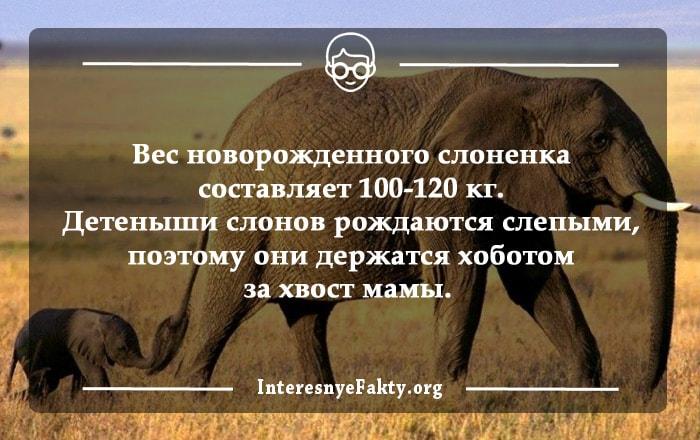 Interesnyie-faktyi-o-slonah-2