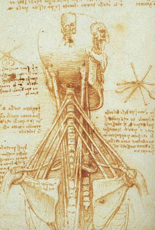 Kartinyi-Leonardo-da-Vinchi-14