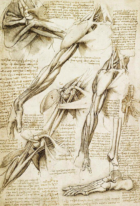 Kartinyi-Leonardo-da-Vinchi-31