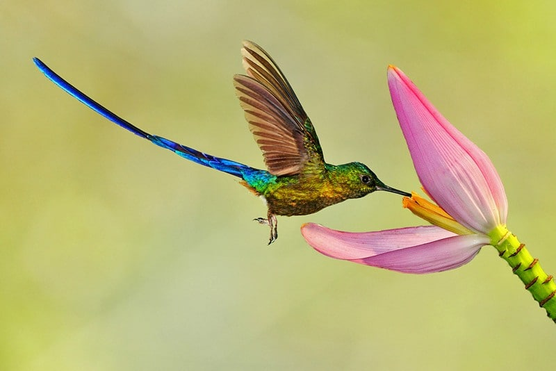 Kolibri-Ptitsa-26