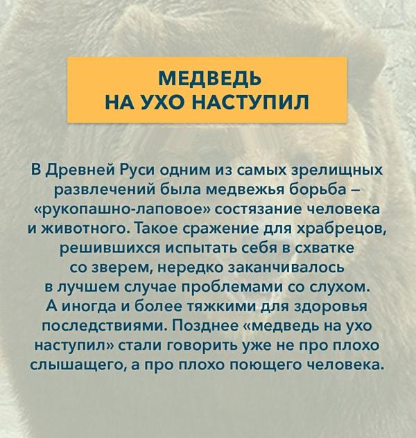 Kryilatyie-vyirazheniya-Medved-na-uho-nastupil