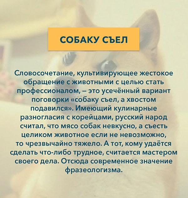Kryilatyie-vyirazheniya-Sobaku-s'el