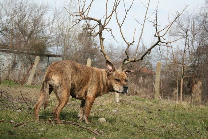 Obman-zreniya-30-foto-interesnyefakty.org-30