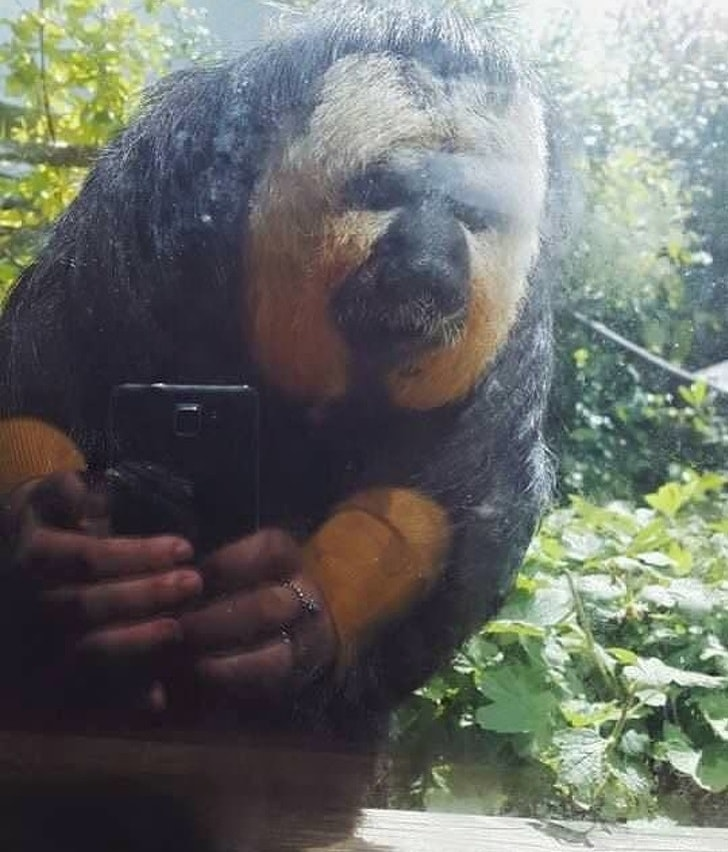 Smeshnyie-foto-Selfi