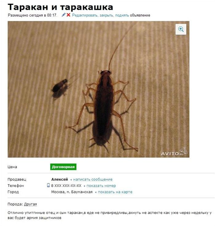 Smeshnyie-ob'yavleniya-na-Avito-13