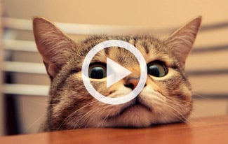 Подборка видео приколов с котами