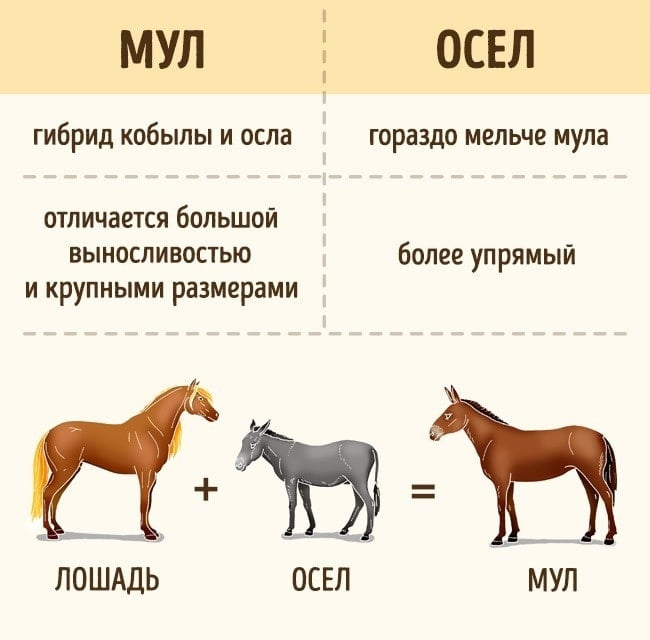 Veshhi-kotoryie-myi-putaem-eshhe-so-shkolyi-10